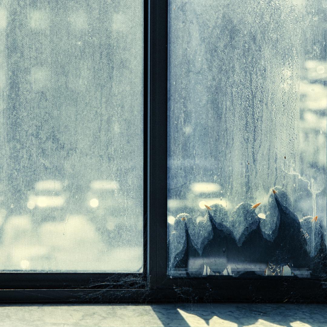 pulizia-vetri-finestra-racoa-pescara